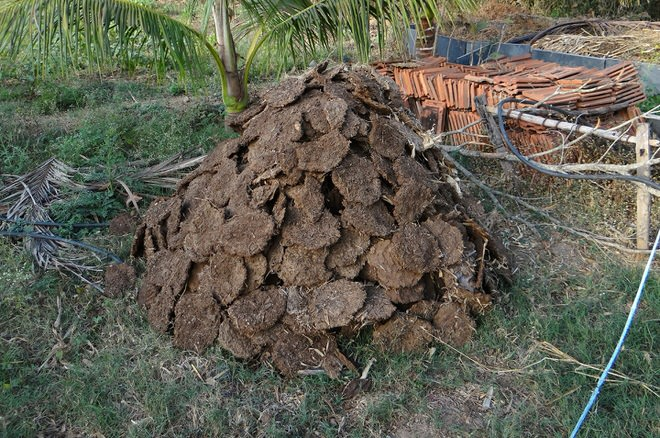 cow-dung-272827_1920